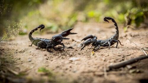 Skorpiony: 8 faktów, które powinieneś znać