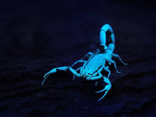 skorpion świecący w ciemności