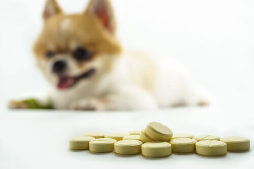 Najlepsze suplementy na stawy psów