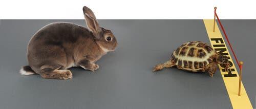 zając i żółw bajki