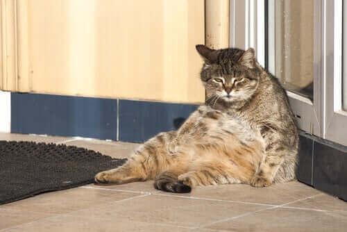 Standardowy dzień w życiu kota - jak wygląda?