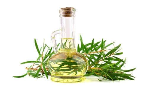Olej z drzewa herbacianego i jego korzyści dla psów