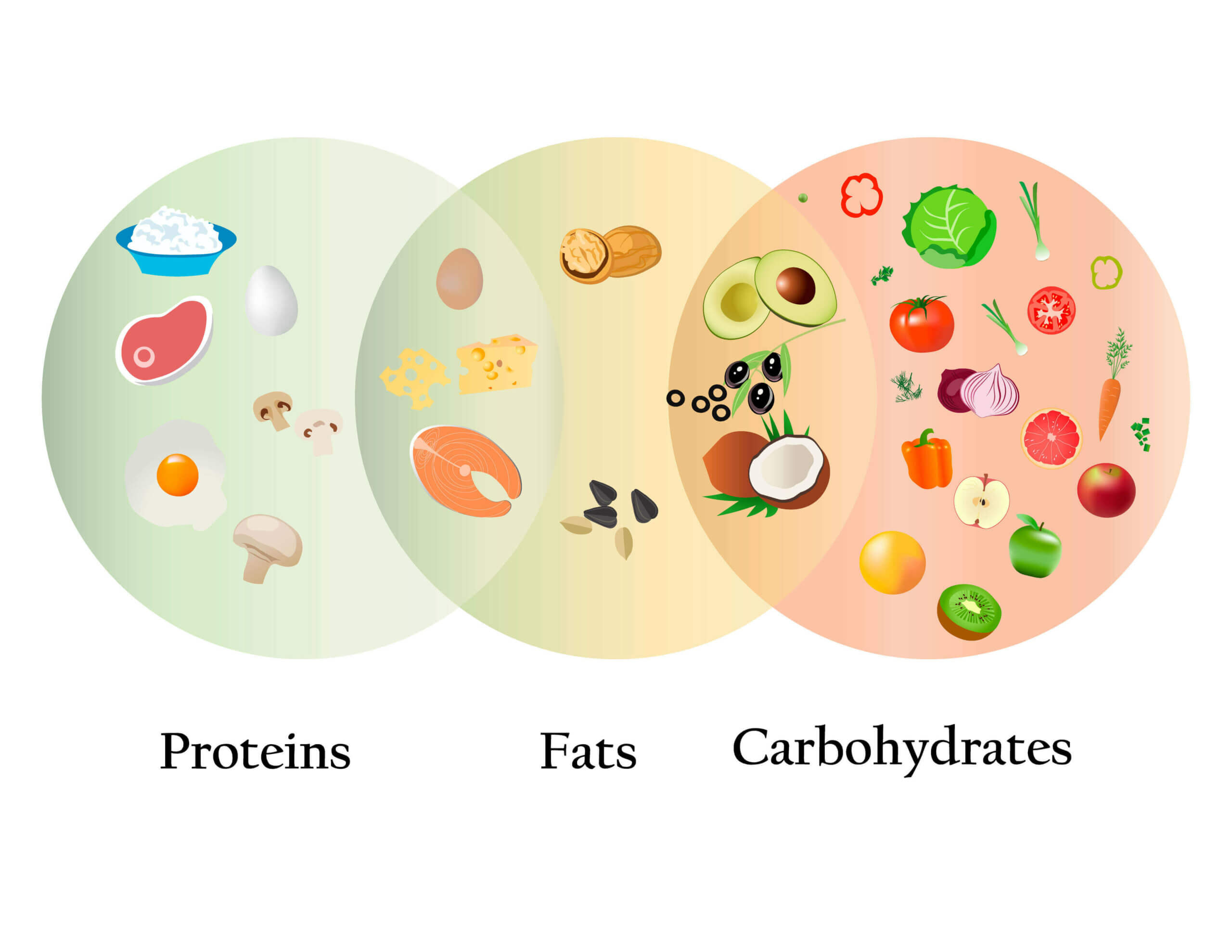 białka tłuszcze i węglowodany dla psów