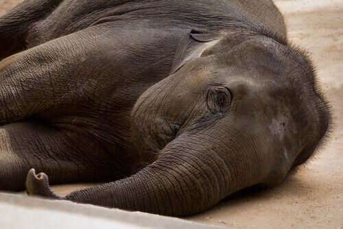 mały słoń pomoc dla słoni