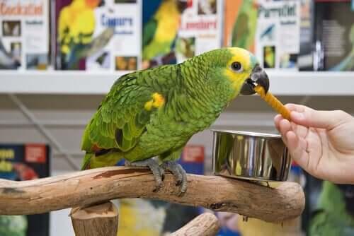 papuga CITES