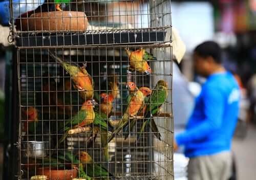 Konwencja CITES - dowiedz się o niej więcej