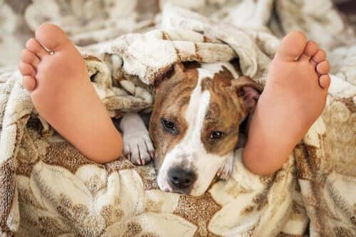 Czy spanie z pupilem w jednym łóżku jest bezpieczne?