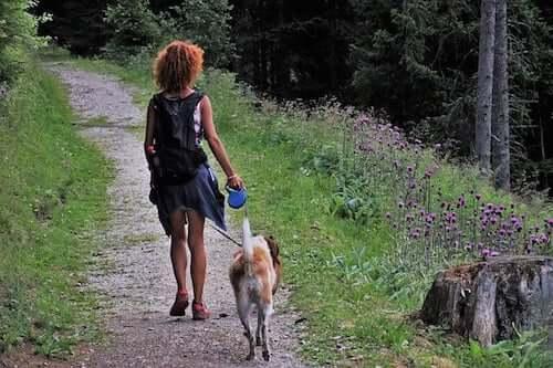 Biwak z psem - oto kilka pomocnych wskazówek