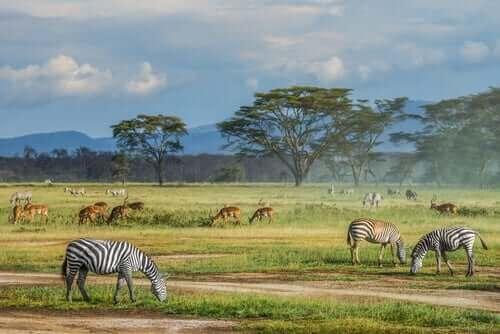 Zachowanie różnorodności biologicznej a gatunki zwierząt
