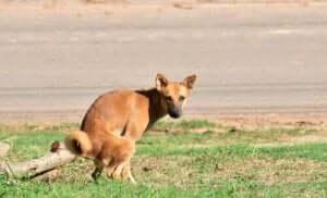 biegunka u psa