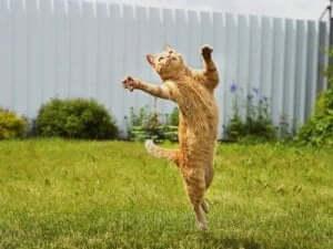 dlaczego koty są elastyczne i zwinne