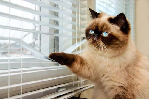 kot patrzący przez okno, a choroby psychiczne