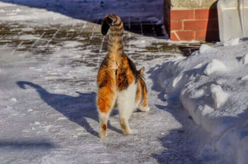 Brzydki zapach z okolic odbytu kota - przyczyny