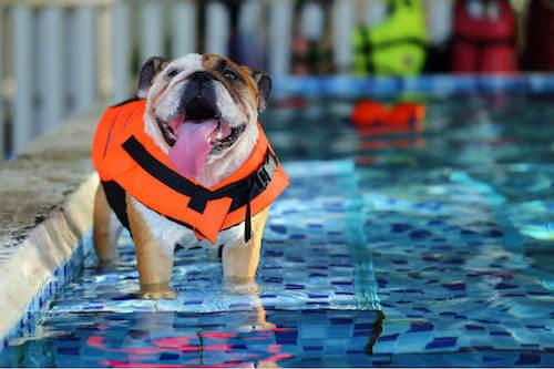 pies w wodzie