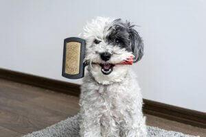 pies ze szczotką