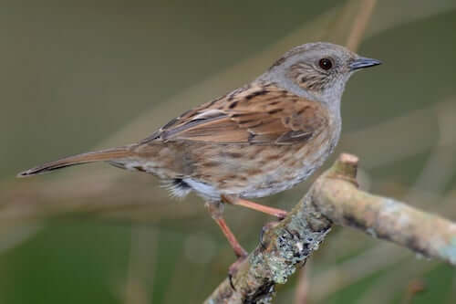 ptak na gałęzi i park Guadarrama