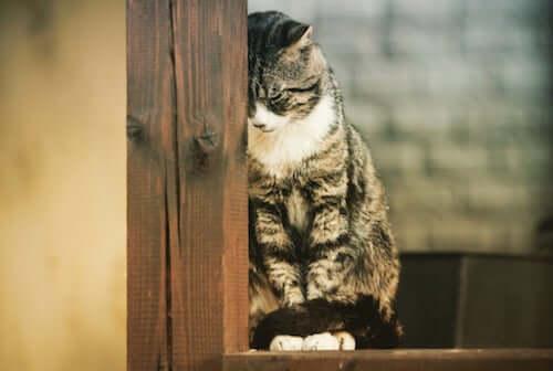 Poznaj trzy choroby psychiczne występujące u kotów