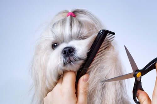 Czy korzystne jest obcinanie psom sierści latem?
