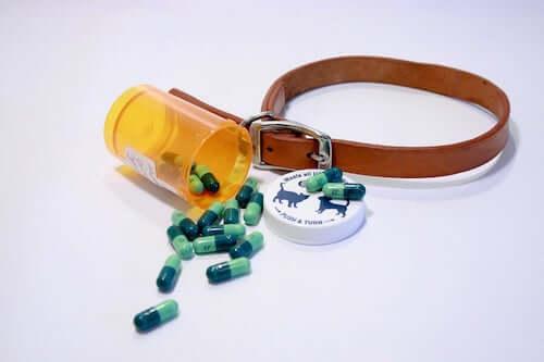 tabletki i smycz