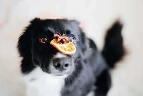 Czy witamina C jest niezbędna dla psów?