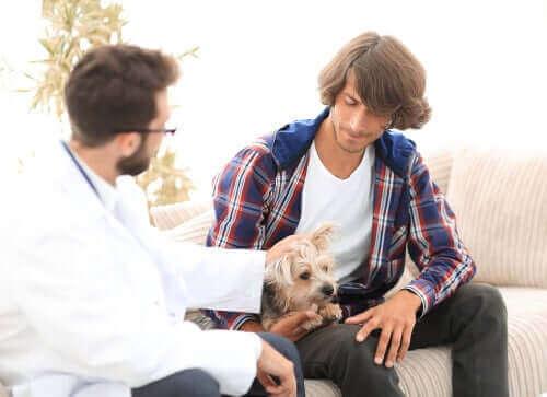 Nadczynność przytarczyc: jak wpływa na psy?