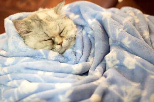 Sen zimowy u kotów - poznaj prawdę na ten temat
