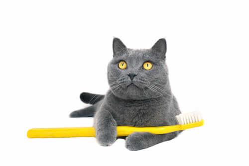 kot ze szczoteczką