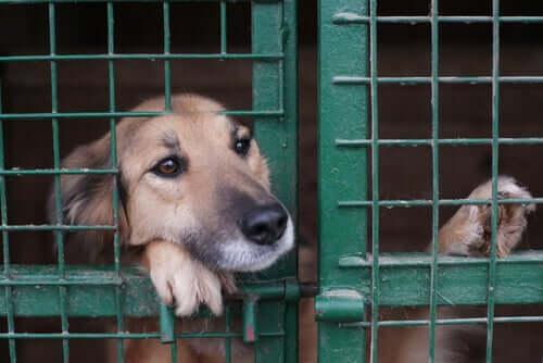 pies w klatce i centrum pomocy zwierzętom