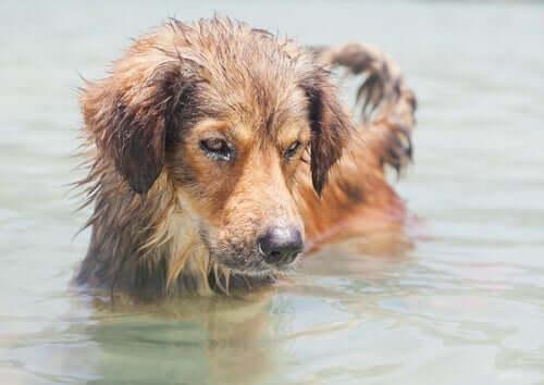Czy woda morska jest niebezpieczna dla psów?