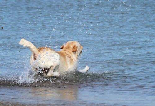 Jak zachowywać się z psem na plaży