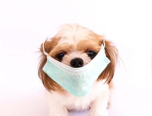 Lista najbardziej zaraźliwych chorób psów