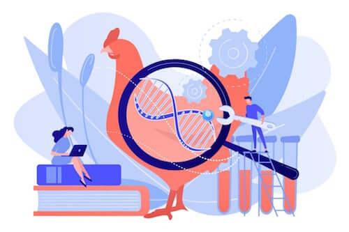 Czym jest selekcja genetyczna zwierząt domowych?