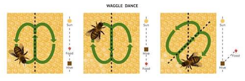 taniec pszczół