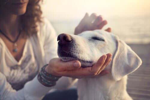 Badania naukowe potwierdzają wyjątkowe umiejętności psów
