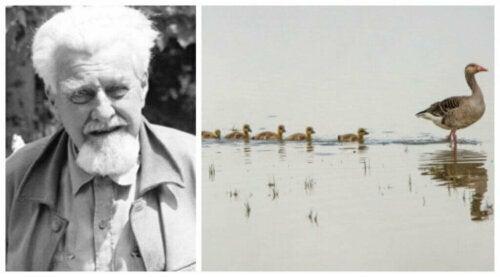 Konrad Lorenz i badanie zachowania zwierząt