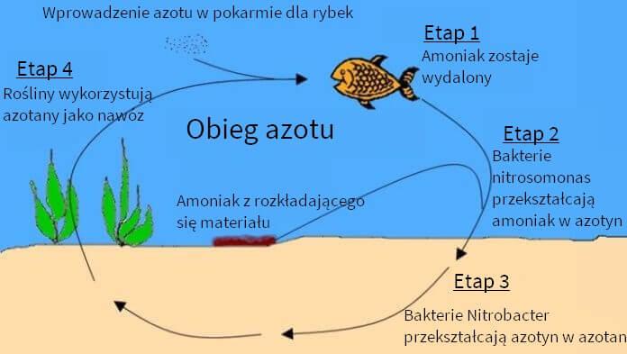 obieg azotu diagram