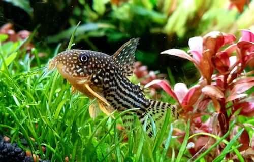 Ryby denne idealne do Twojego akwarium