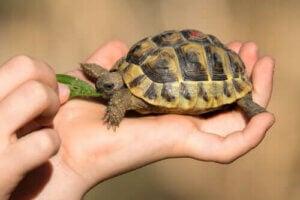 Żółwie domowe – 3 częste problemy zdrowotne