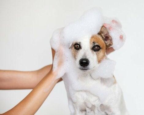 kąpiel psa