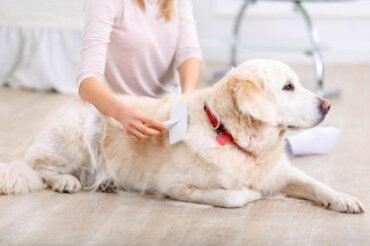 Linienie u psów: jak długo trwa i jak się na nie przygotować?