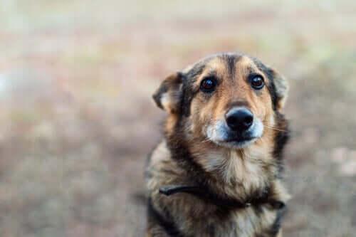 wystraszony pies a zaburzenia obsesyjno-kompulsywne