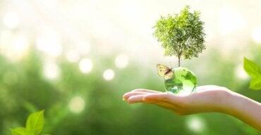 Sukcesja ekologiczna: czy wiesz, na czym polega?