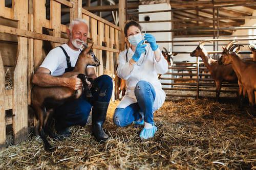 weterynarz z kozą