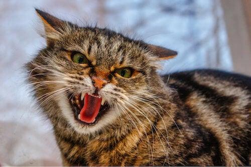 Najczęstsze zaburzenia behawioralne u kotów