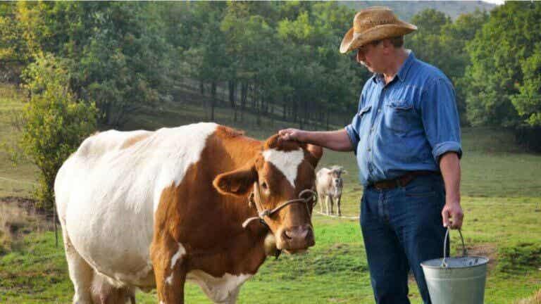 Mykotoksyny a hodowla zwierząt – co je łączy?