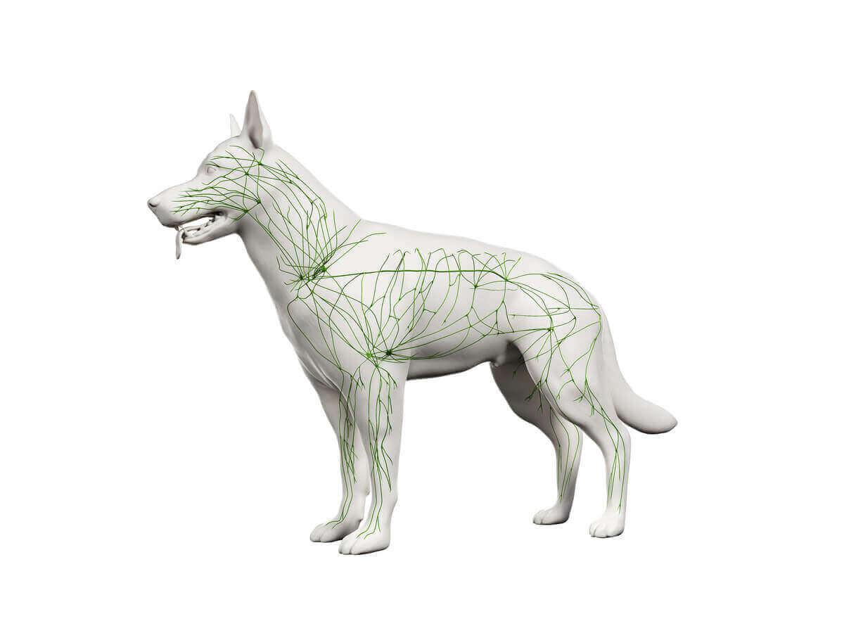 Choroby autoimmunologiczne u psów