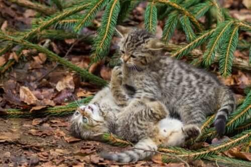 Kocięta bawią się na ziemi