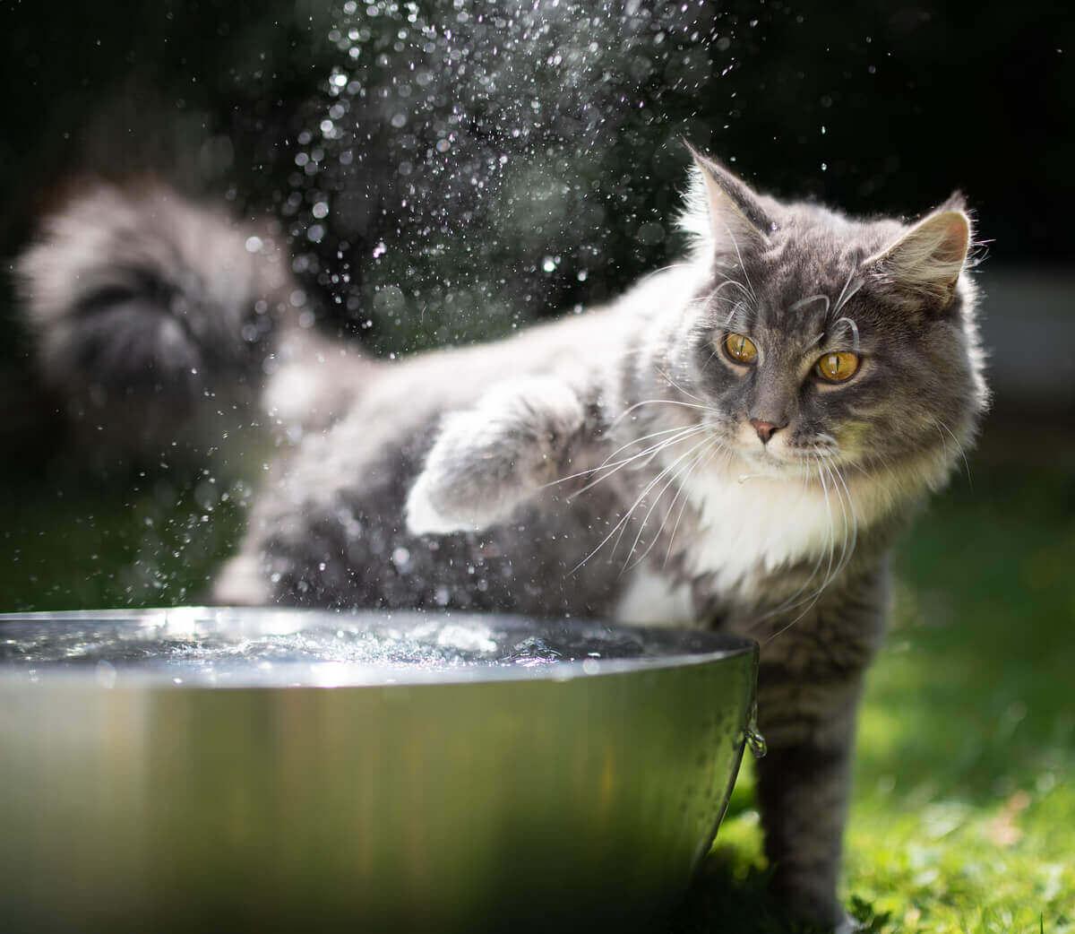 kot bawiący się wodą
