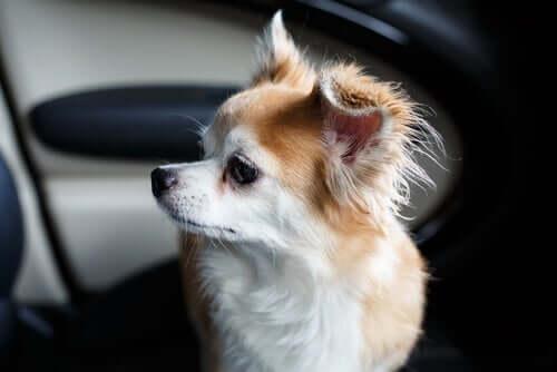 Mężczyzna włamuje się do BMW, by uratować psa