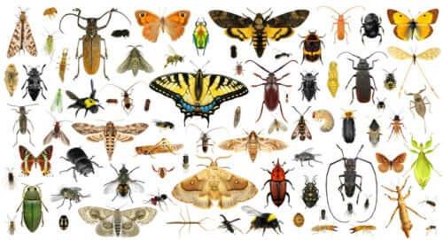 Ilustracja różnych gatunków owadów